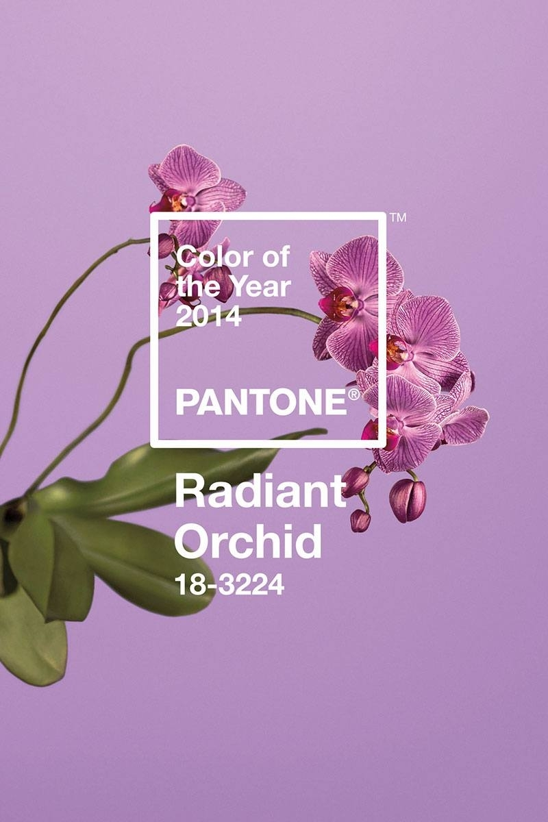 Pantone Color Of The Year 2014 Radiant Orchid | Carrie Loves