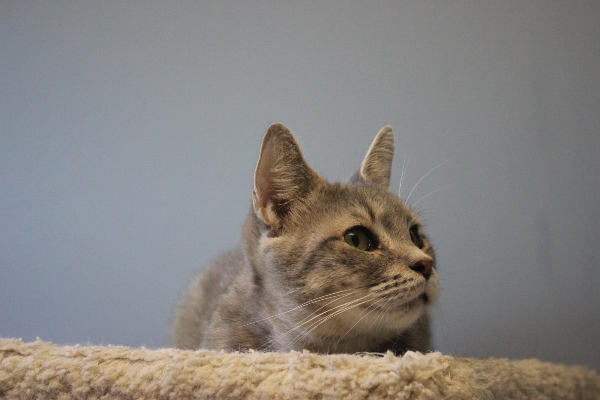 Wonton - Adopted! | North Country Animal League