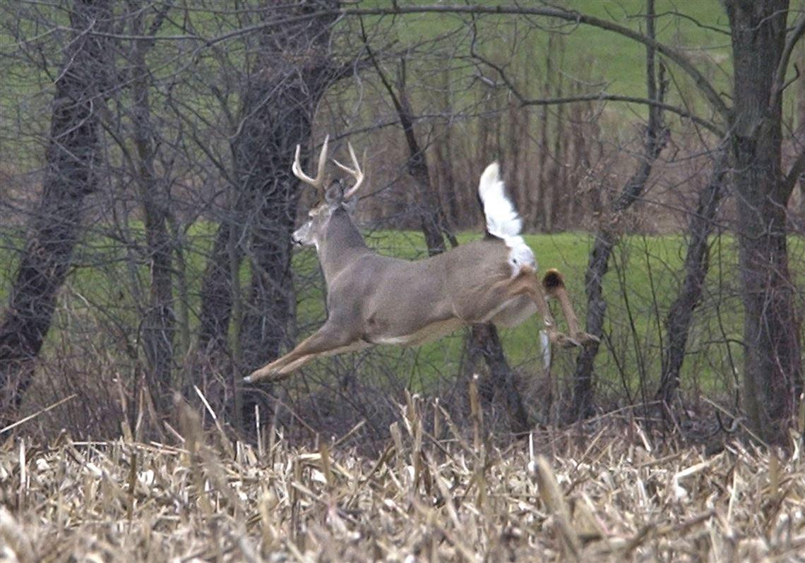 Deer Movement Chart Kentucky - The Future