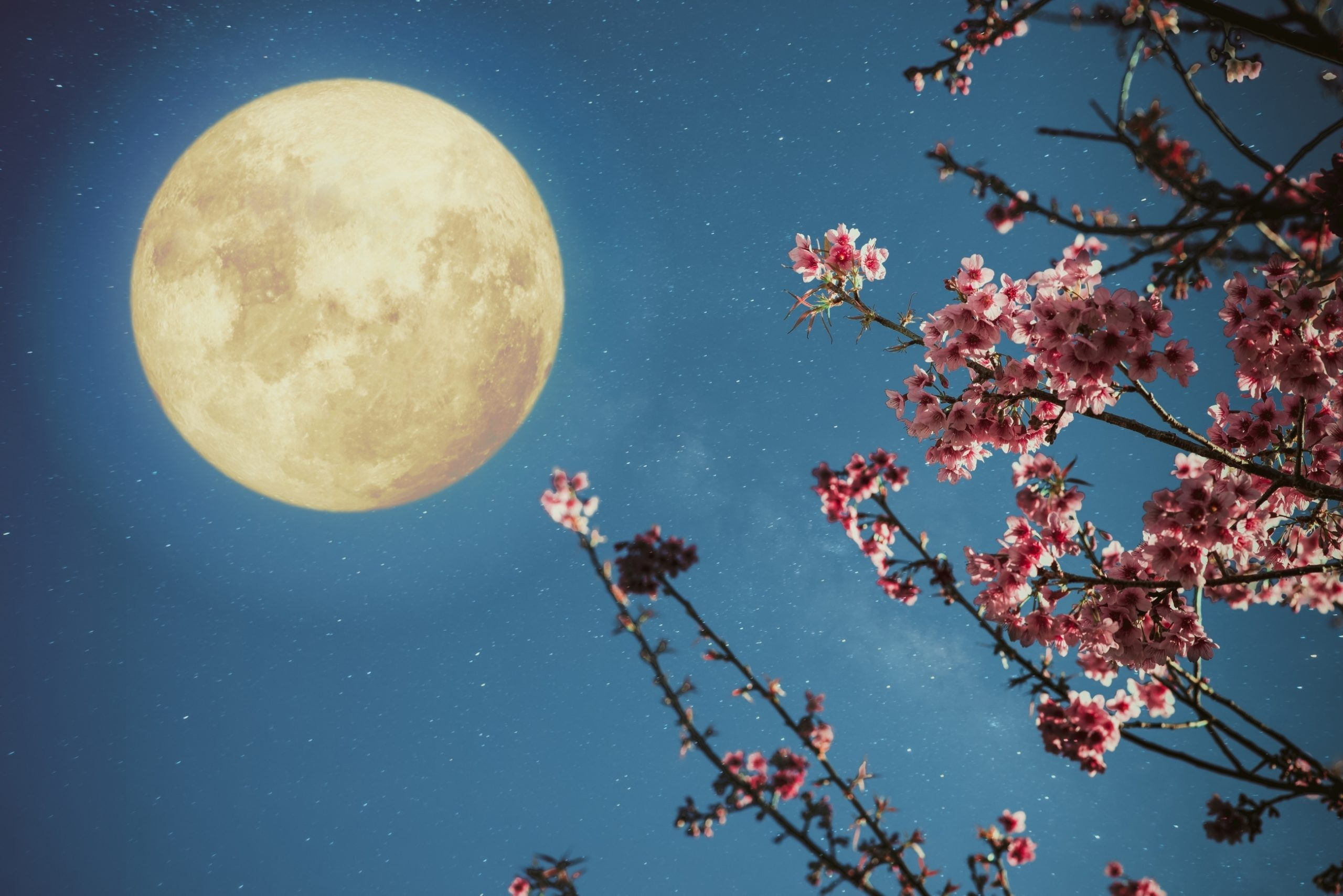 Gardening By The Moon: How To Plant By The Moon'S Phase