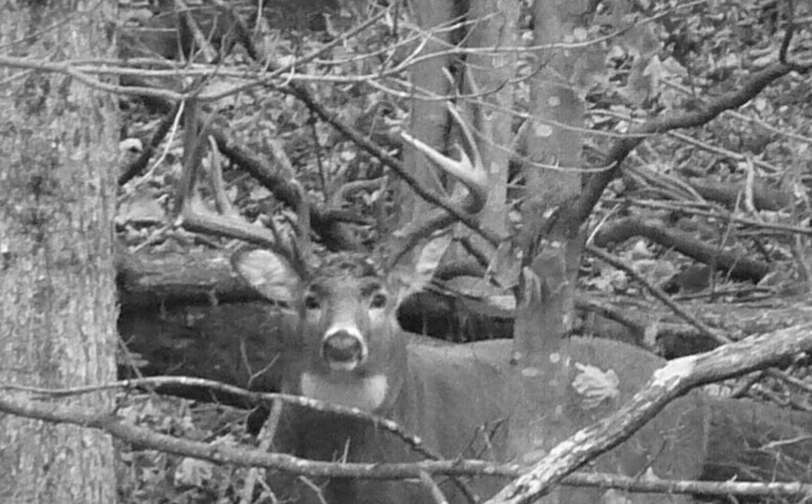 2021 Whitetail Deer Rut Predictions   Calendar Printables