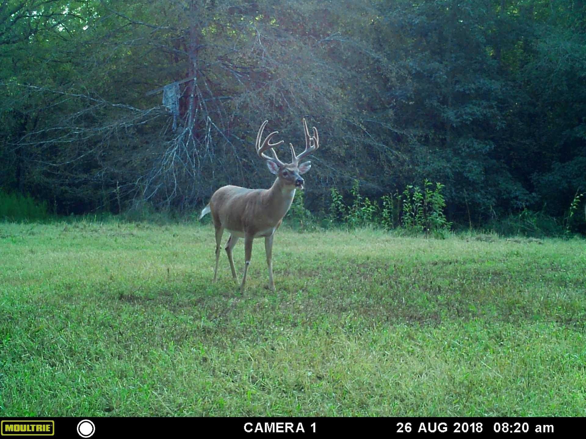 White Tail Deer In Georgia Map - Template Calendar Design